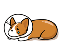 Corgi Dog KaKa - Cutie sticker #8253507