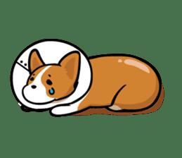 Corgi Dog KaKa - Cutie sticker #8253507