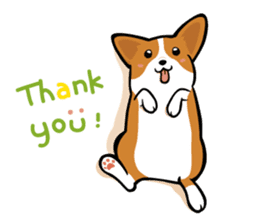 Corgi Dog KaKa - Cutie sticker #8253512