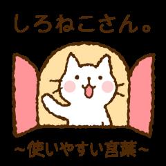 Nice and cute kitty (shironeko)