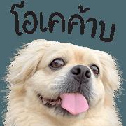 สติ๊กเกอร์ไลน์ เลโอ : หมาแหละดูออก
