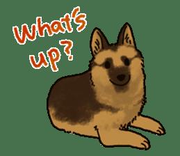 The German shepherd dog!! sticker #8352965