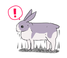 Momo the rabbit! sticker #8355901