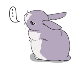 Momo the rabbit! sticker #8355907