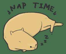 Hey Capybara! sticker #8432636
