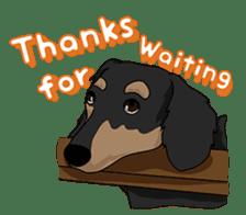 Cute Dachshund Ryu!! Vol 2 (English) sticker #8436974
