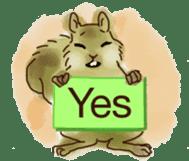 Squirrel Cutie sticker #8585491