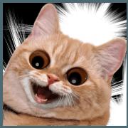 สติ๊กเกอร์ไลน์ เหมียว! เค้าแมวนะ 5 : แมวเกรียนๆ