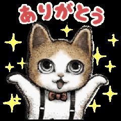 Cute cat (everyday)