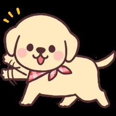 Cheerful golden retriever