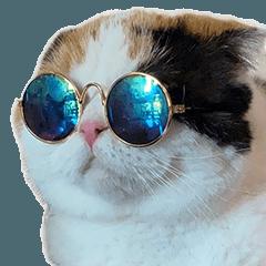 ตูมามิ้ง เป็นแมวหรือเป็นมีม