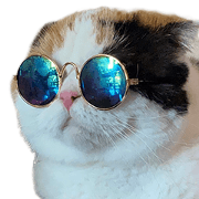 สติ๊กเกอร์ไลน์ ตูมามิ้ง เป็นแมวหรือเป็นมีม