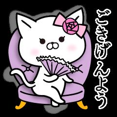 Madamu cat