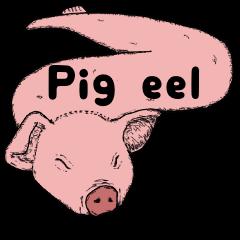 Pig eel.