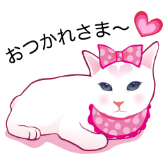 fashionable kawaii cat