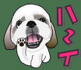 Cute Shih Tzu sticker #8836203