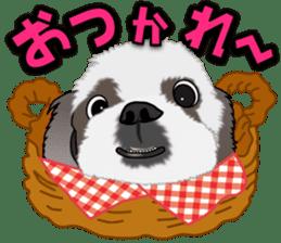 Cute Shih Tzu sticker #8836205