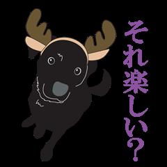 Fujishiro's dog Apollo
