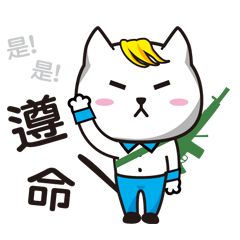 Mr cat work  Records