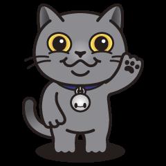 MIA the British Shorthair Cat