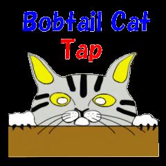"""Japanese Bobtail cat """"TAP"""""""