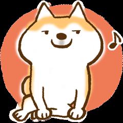 Shiba Inu Dog Shinbe
