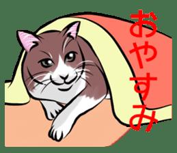 Lazy cat sticker + sticker #9159839
