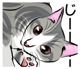 Lazy cat sticker + sticker #9159841