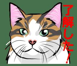 Lazy cat sticker + sticker #9159842