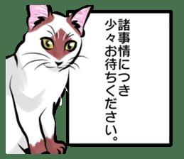Lazy cat sticker + sticker #9159846