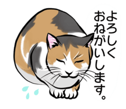 Lazy cat sticker + sticker #9159866