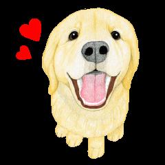 Golden Retriever Sticker (English)