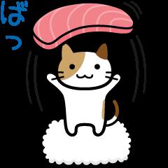 Sushi Sushi cat