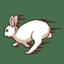 Cute warm fuzzy rabbit sticker #9477894