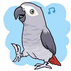 Fuku the Grey Parrot