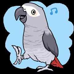 Fuku the Grey Parrot