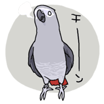 Fuku the Grey Parrot sticker #9542589