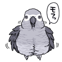 Fuku the Grey Parrot sticker #9542592