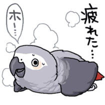 Fuku the Grey Parrot sticker #9542594