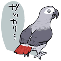 Fuku the Grey Parrot sticker #9542595