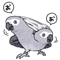 Fuku the Grey Parrot sticker #9542597