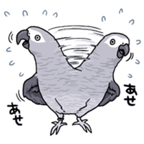 Fuku the Grey Parrot sticker #9542599