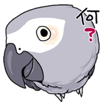 Fuku the Grey Parrot sticker #9542601