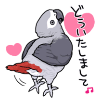Fuku the Grey Parrot sticker #9542607