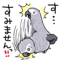 Fuku the Grey Parrot sticker #9542612