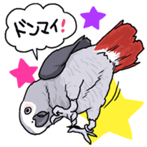 Fuku the Grey Parrot sticker #9542618