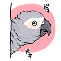 Fuku the Grey Parrot sticker #9542621