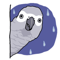 Fuku the Grey Parrot sticker #9542622