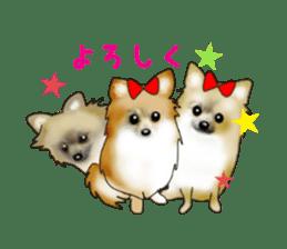PON.de.Pomeranian3 sticker #9549924