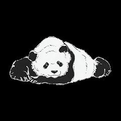 Cute Panda and Whale